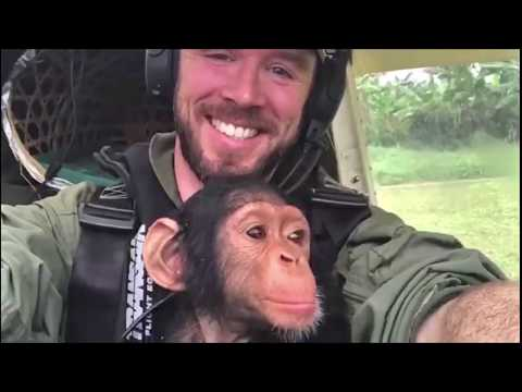 Pilot rescues baby chimp in Zenith STOL