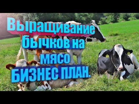 Выращивание бычков на мясо. Бизнес план.
