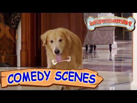 Akshay Kumar Trying To Kill The Dog- Comedy Scenes | Entertainment | Hindi Film
