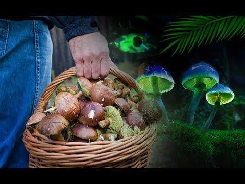 Грибы во сне - К чему снятся грибы?