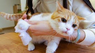 [Cat Live] Zhupi is tainted with the feces since he is too short…