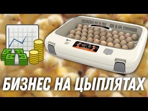 , title : 'Окупаемость инкубатора для яиц: какая выгода и прибыль? Реальные цифры и опыт по продаже курицы