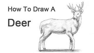 Смотреть онлайн Рисуем оленя карандашом поэтапно