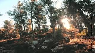 Just winter forest FPV