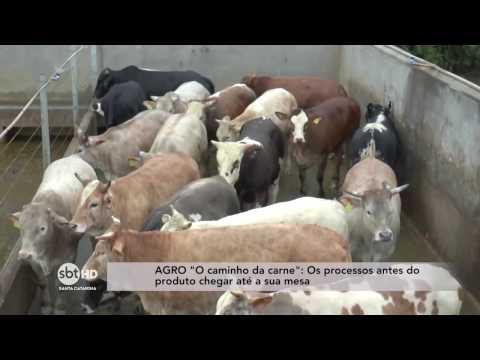 O caminho da carne – Os processos antes do produto chegar até a sua mesa
