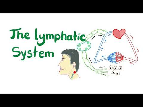 , title : 'The Lymphatic System, All you need to know.'
