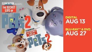 The Secret Life Of Pets 2   All-New Mini Movies - Now on 4K, Blu-ray, DVD & Digital   Illumination