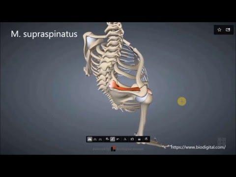 Wie Schmerzen im unteren Rücken zu behandeln