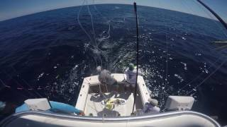 Sailfish on the fly in Guatemala- Blue Bayou Lodge & Captain Chris Starrs