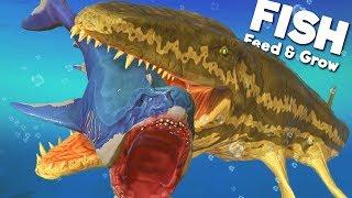 feeding grow fish game
