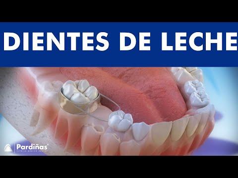 Los dientes de leche y el uso de mantenedores de espacio ©