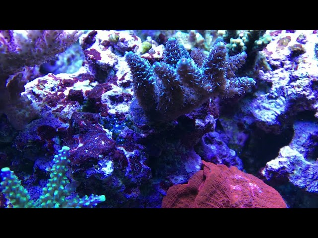 Reeftank Meerwasser Showtank Sps Lps Tank Fauna Marin