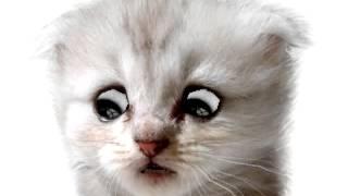 The Singiing Cat