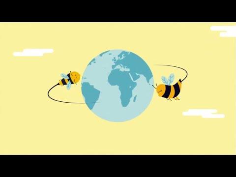 Fotograma del vídeo: PICA. Plataforma Innovadora para el Cuidado de las Abejas