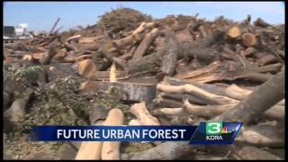Cal Fire grant will help pay for trees in Modesto