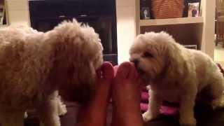 Dogs Lick Feet