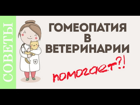 Гомеопатия в ветеринарии. Мнение ветеринара.