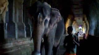 Elephant walking in the temple corridor, Rameshwaram