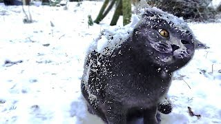 5 Cats In Snow for the FIRST TIME!