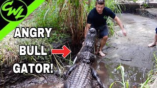 Video Trying to clean BULL GATOR PIT!!! MP3, 3GP, MP4, WEBM, AVI, FLV Agustus 2019