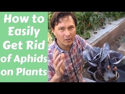 , title : 'How to Easily Get Rid of Aphids on Plants