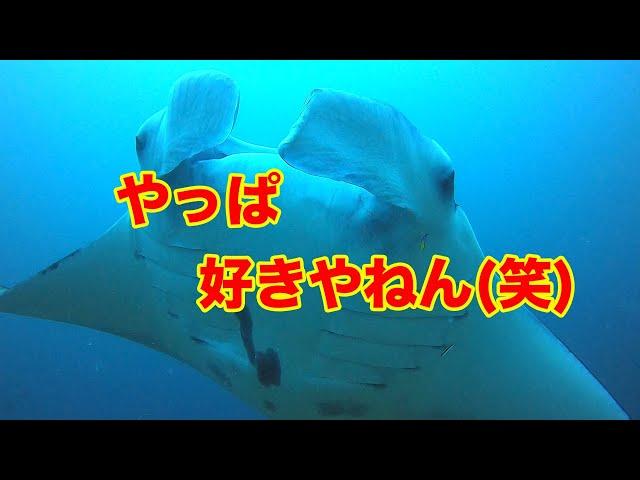 石垣島ダイビング|久しぶりのマンタに嬉しさを隠しきれない…|ビーチライフ石垣島