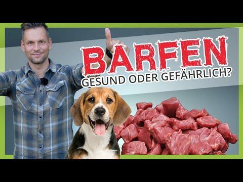 BARFEN ► Wie gesund oder gefährlich ist die Fütterung mit rohem Fleisch?