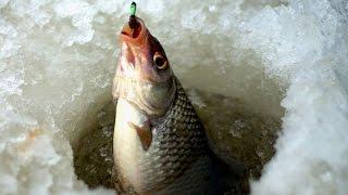 Калининградский рыболовный форум в контакте