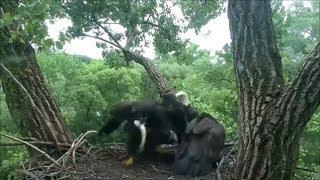 Decorah Eagles- Short Flights- Two Meals and Steals