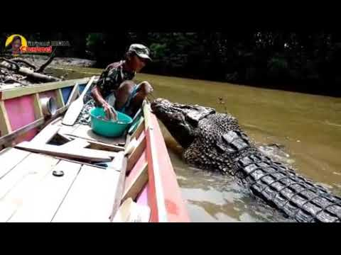 Crazy Man Feeds Massive Crocodile by Hand