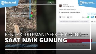 Unik! Seorang Pemuda Mendaki Gunung Ditemani Seekor Kucing, Tak Sengaja Bertemu di Pos Pendakian