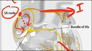 New! ECG Videos from Dr Jamal