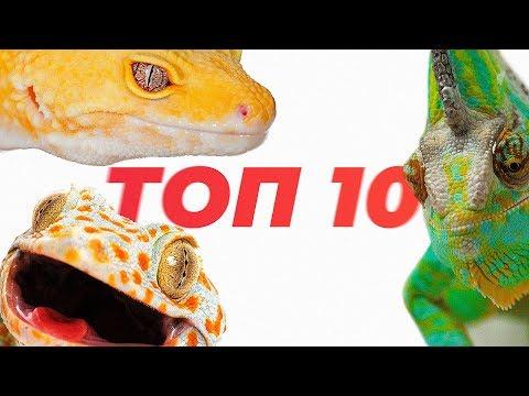 , title : 'Топ 10 ящериц для содержания дома.