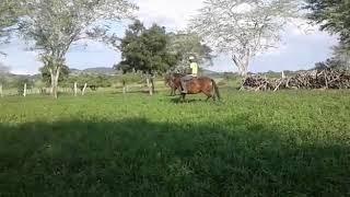 Equídeo Equino - e-rural Imagens