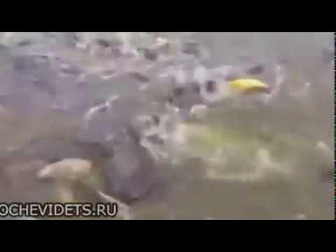 Это не рыбы, это - монстры!