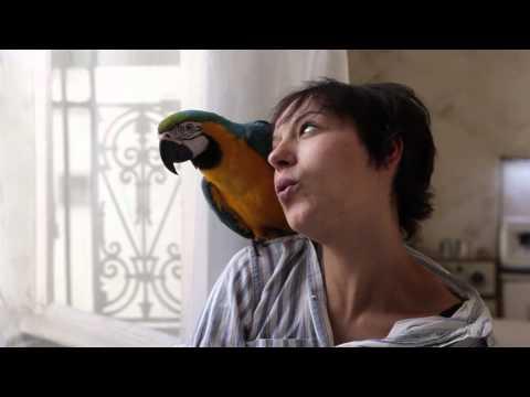"""Vidéo : """"Les Cinglés""""..."""