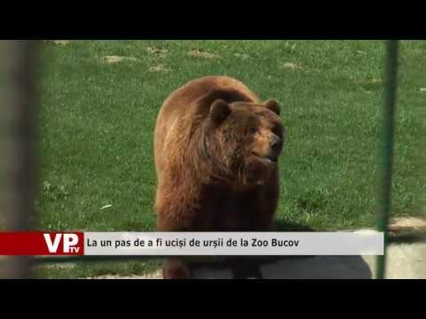 La un pas de a fi uciși de urșii de la Zoo Bucov