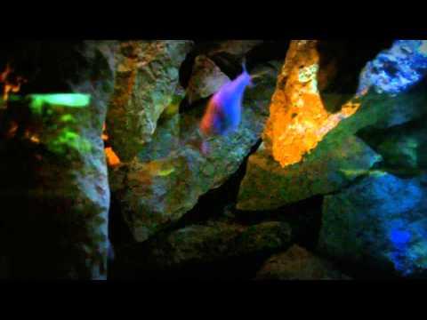 musica per relax (acquario di pesci)