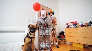 Funny PRANKS on DOG for 24 HOURS!