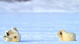 A Chance Encounter With a Polar Bear and Her Two Cubs