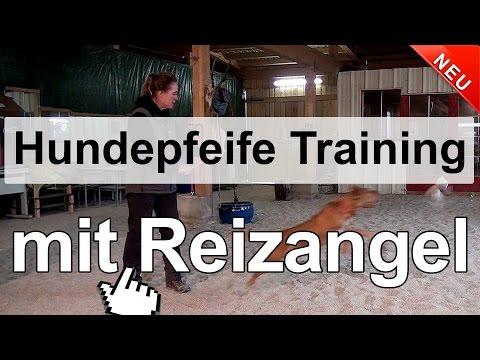 Hundetraining - Hundepfeife Training mit Reizangel