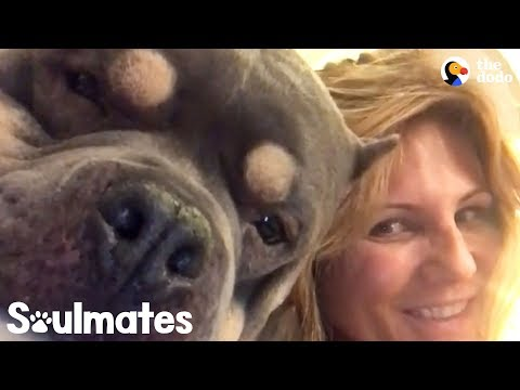 This Woman's Addiction Is Her Dog - PUDGE | The Dodo Soulmates