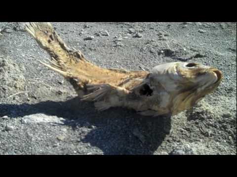 Salton Sea: Decomposition Zen