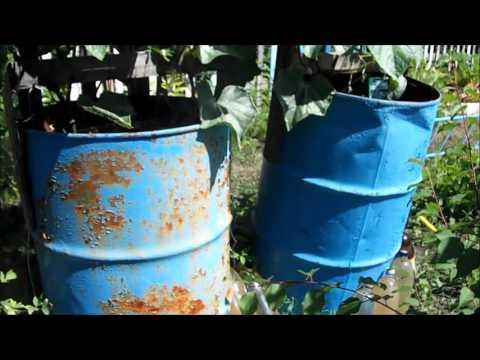 Выращивание китайских огурцов в бочке
