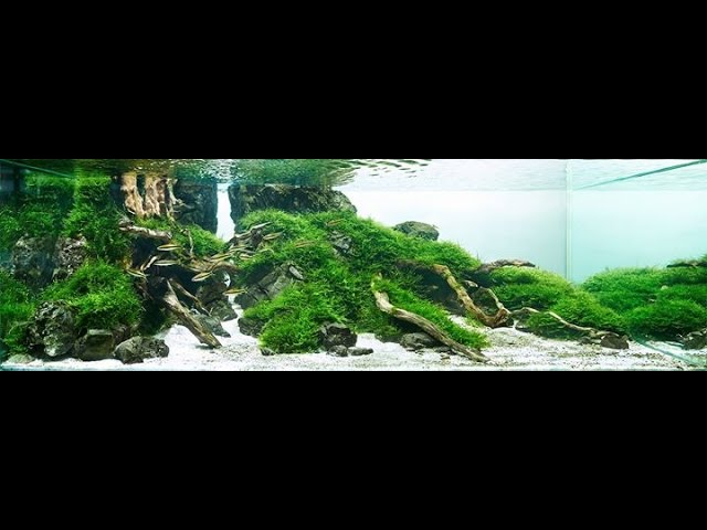 Aquarium 60 l.  Coridoras and  cardinalfish.