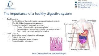 The importance of healthy digestive system