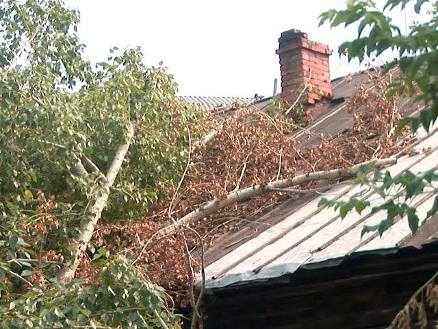 Дерево рухнуло на дом
