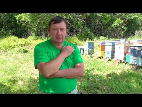 """Две болезни пчёл в июне и """"чистый мёд"""""""