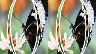 Butterflies In Rotating Circles 3D