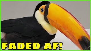 My Toucan Gets SUPER HIGH at the Vet for the First Time! (Toupac at the vet)